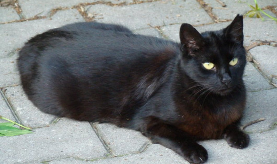 7b86a05ccfcf Video smile  η γάτα   το φευγάτο περιστέρι - Ένας άνισος αγώνας - Κυρίως  Φωτογραφία