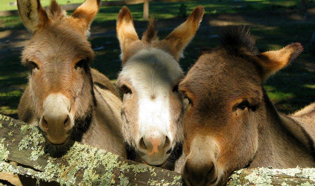 Smile: Γαϊδούρια, μουλάρια και άλογα με αριθμό κυκλοφορίας στη Λέρο - Κυρίως Φωτογραφία - Gallery - Video