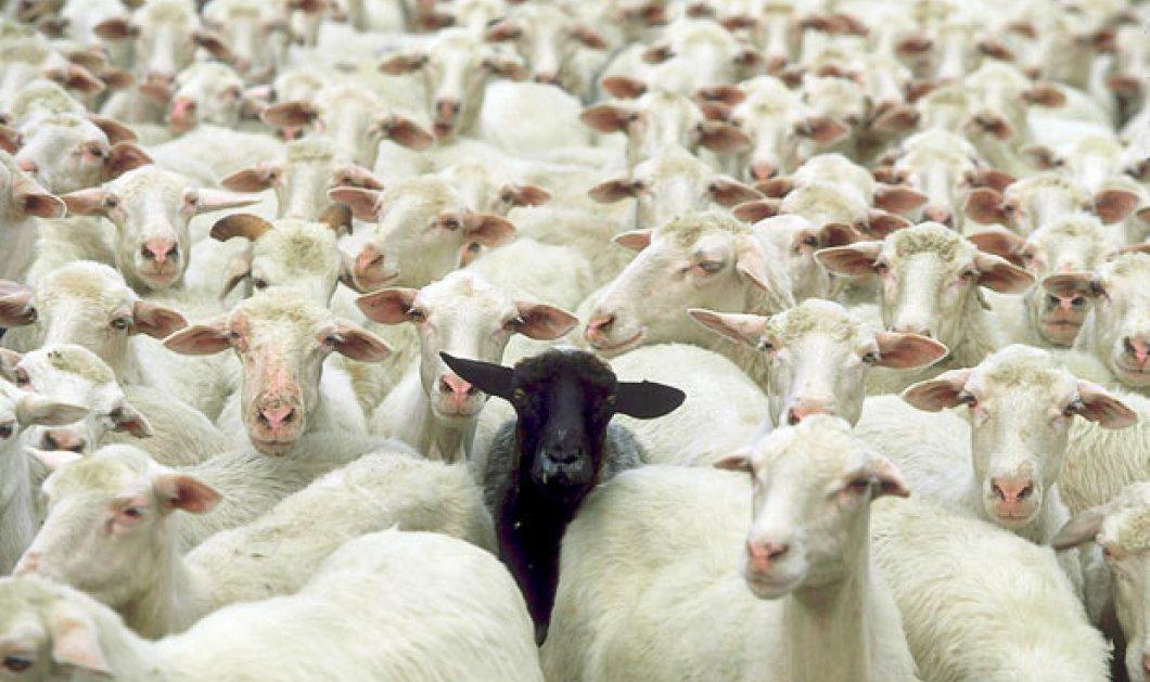 Διάσημες οικογένειες με μαύρα πρόβατα: Ο υπερχρεωμένος γιος του εφευρέτη Έντισον, ο τρομοκράτης Μπιν Λάντεν των ζάπλουτων Σαουδαράβων  - Κυρίως Φωτογραφία - Gallery - Video