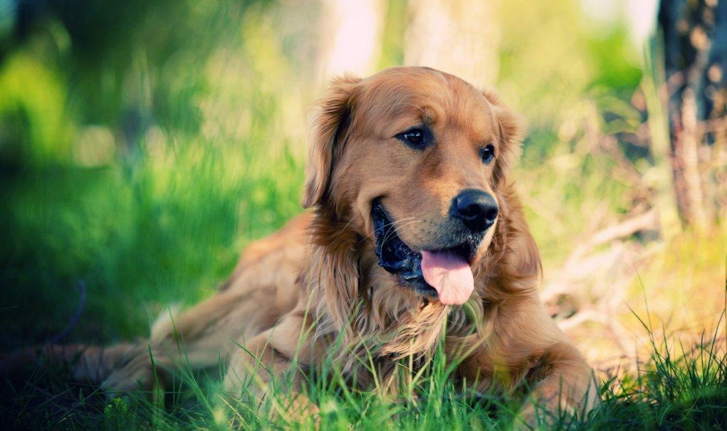 Πώς θα καταλάβω ότι ο σκύλος μου γερνάει; Όλα τα σημάδια για να βοηθήσουμε τον φίλο μας  - Κυρίως Φωτογραφία - Gallery - Video