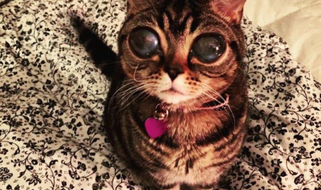 Pet of the day η Matilda: Η 2χρονη γατούλα με μάτια που «υπνωτίζουν» - Κυρίως Φωτογραφία - Gallery - Video