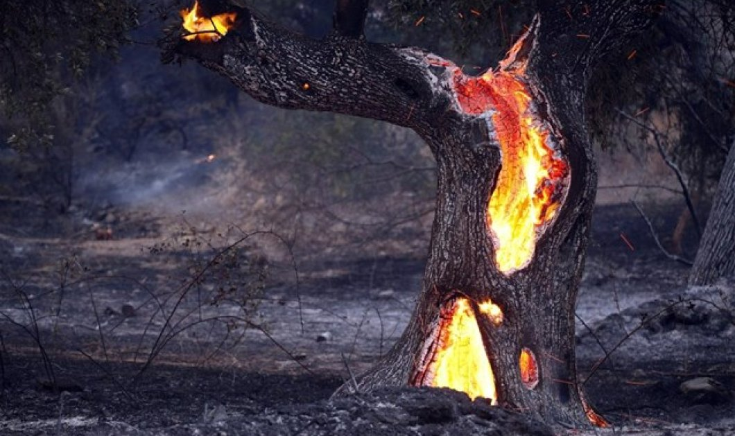 SOS: Υψηλός κίνδυνος πυρκαγιάς αύριο Σάββατο, δείτε σε ποιες περιοχές   - Κυρίως Φωτογραφία - Gallery - Video
