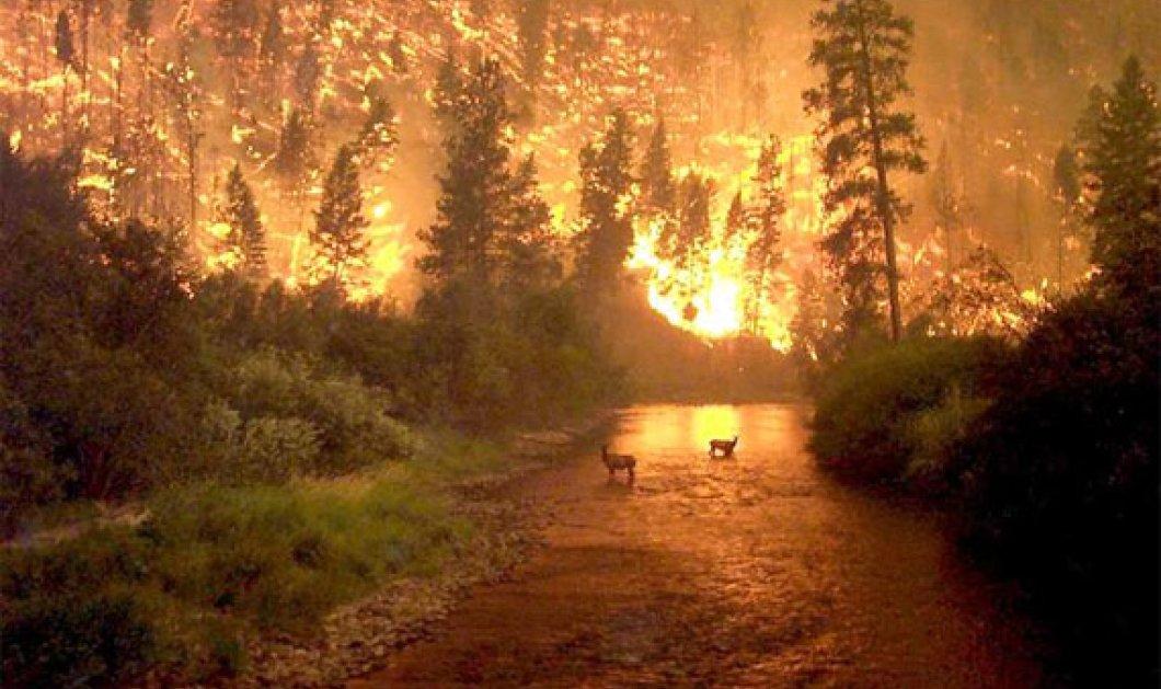 Πολύ υψηλό κίνδυνο πυρκαγιάς  προβλέπει για τη Δευτέρα η Γενική Γραμματεία Πολιτικής Προστασίας - Κυρίως Φωτογραφία - Gallery - Video