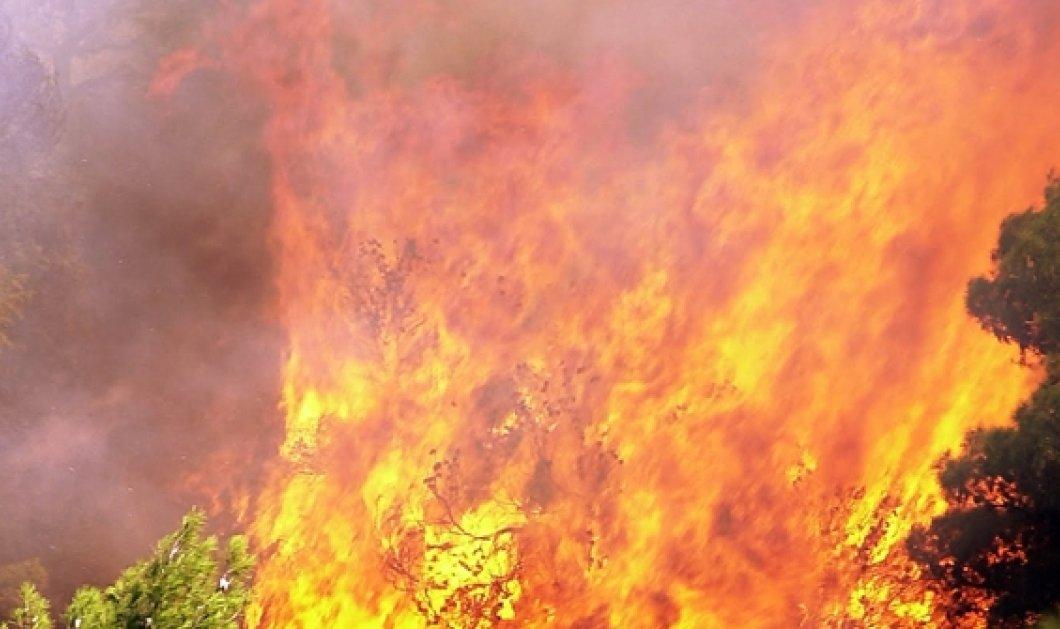 Δήμαρχος Ηλιούπολης: ''Οι πυρκαγιές οφείλονται σε εμπρησμούς'' - Κυρίως Φωτογραφία - Gallery - Video