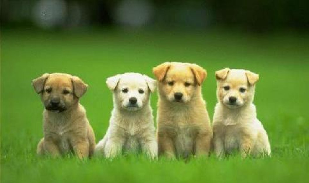 Γιατί τα σκυλιά γυρίζουν το κεφάλι τους πλάγια όταν τους μιλάμε; - Κυρίως Φωτογραφία - Gallery - Video