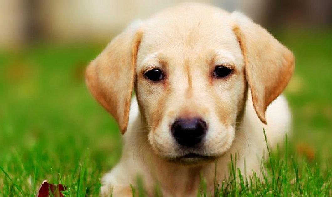 Τι είναι τα άγανα και πώς μπορούμε να προστατέψουμε το σκύλο μας τώρα το καλοκαίρι   - Κυρίως Φωτογραφία - Gallery - Video
