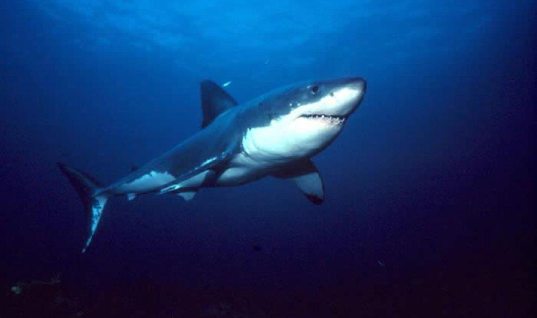 Βίντεο θρίλερ: Καρχαρίες κολυμπούν μέσα σε κρατήρα ενεργού ηφαιστείου   - Κυρίως Φωτογραφία - Gallery - Video
