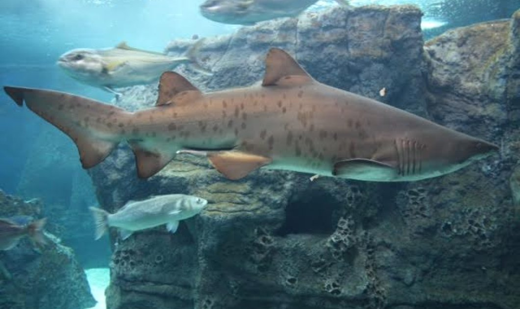 Good News: Τα δύο ενυδρεία της Κρήτης (φώτο-βίντεο) στα 25 καλύτερα του πλανήτη: Cretaquarium - Aquaworld   - Κυρίως Φωτογραφία - Gallery - Video