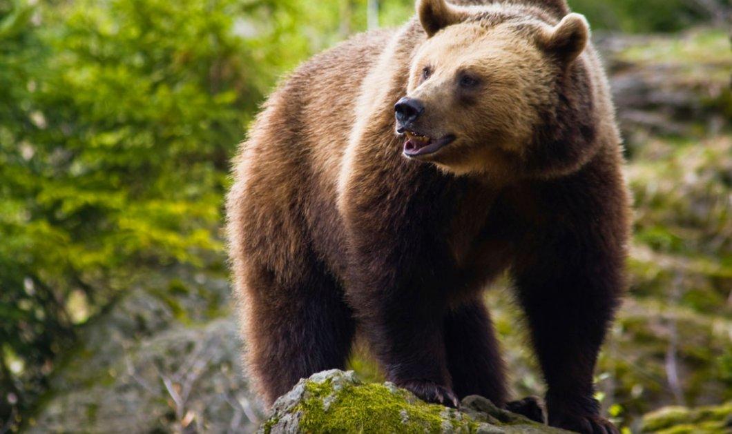 ΗΠΑ: Άνδρας βρέθηκε νεκρός από επίθεση αρκούδας στο Πάρκο Yellowstone   - Κυρίως Φωτογραφία - Gallery - Video