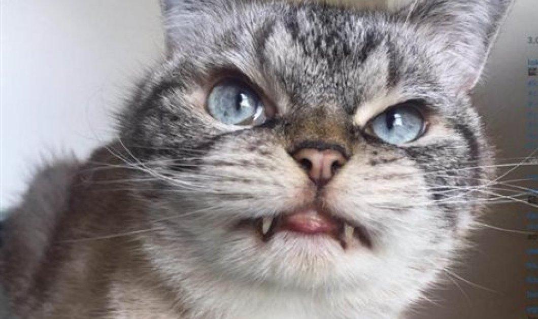 55ce4dd5dc8e Γάτα - βαμπίρ με εμφάνιση Κόμη Δράκουλα κάνει θραύση στο Διαδίκτυο! -  Κυρίως Φωτογραφία -