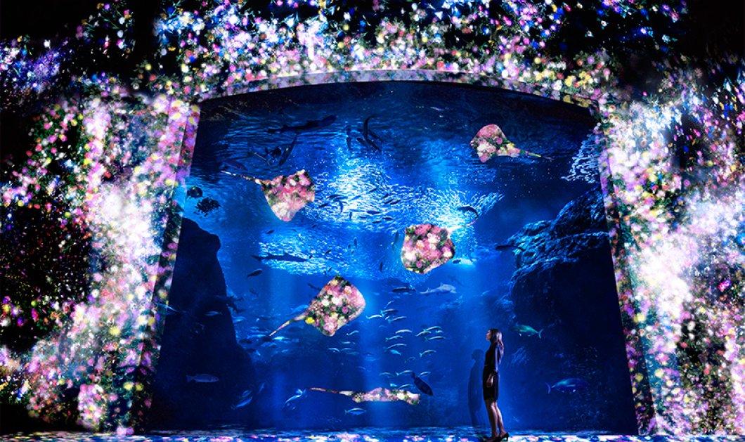 Καλημέρα με μια βουτιά σε ψηφιακό ενυδρείο μαγικό - Πανέμορφο σαν θαλάσσιο βοτανικό κήπο - Κυρίως Φωτογραφία - Gallery - Video