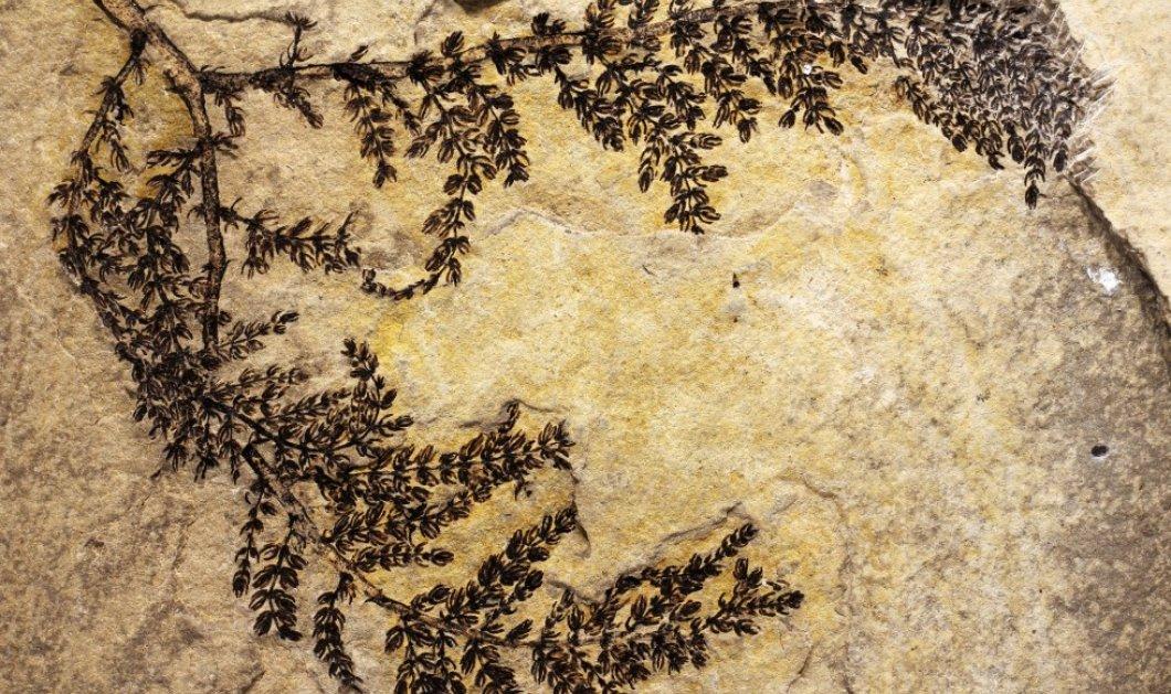 Ανακαλύφθηκε λουλούδι που άνθισε πριν από 130 εκατ. χρόνια - Είναι το πρώτο στη γη; - Κυρίως Φωτογραφία - Gallery - Video
