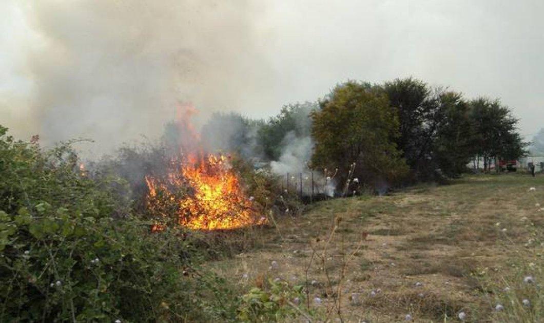 Oλονύχτια μάχη με τις φλόγες στην Πάρνηθα - Υπό έλεγχο η φωτιά - Κυρίως Φωτογραφία - Gallery - Video
