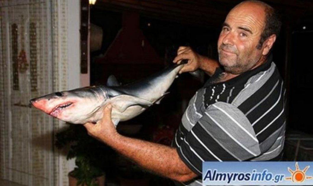 Μικρός καρχαρίας πιάστηκε στα δίχτυα ψαρά στον Παγασητικό - Η μεγάλη μαμά του που είναι; - Κυρίως Φωτογραφία - Gallery - Video