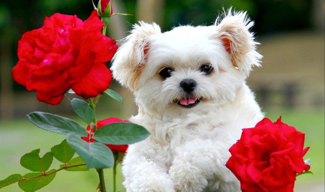 Υιοθεσία σκύλου: 10 πράγματα που πρέπει να γνωρίζετε πριν αποκτήσετε το νέο πιστό σας φίλο - Κυρίως Φωτογραφία - Gallery - Video
