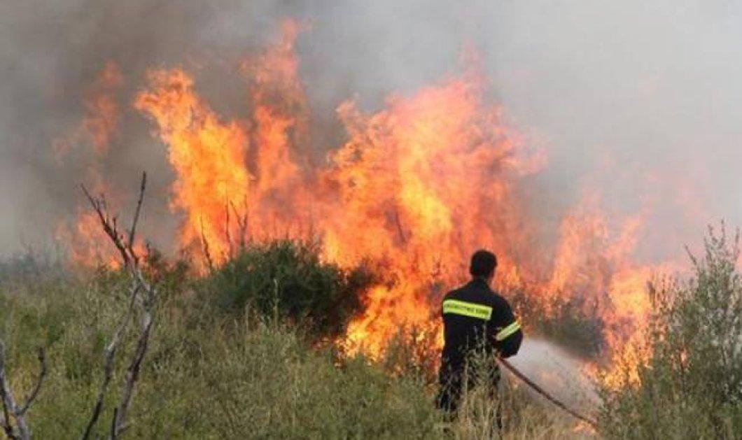 Σε ύφεση μετά από 2 μέρες ''μάχης'' η φωτιά στο ξυλόκαστρο - Αποχώρησαν τα εναέρια μέσα - Κυρίως Φωτογραφία - Gallery - Video