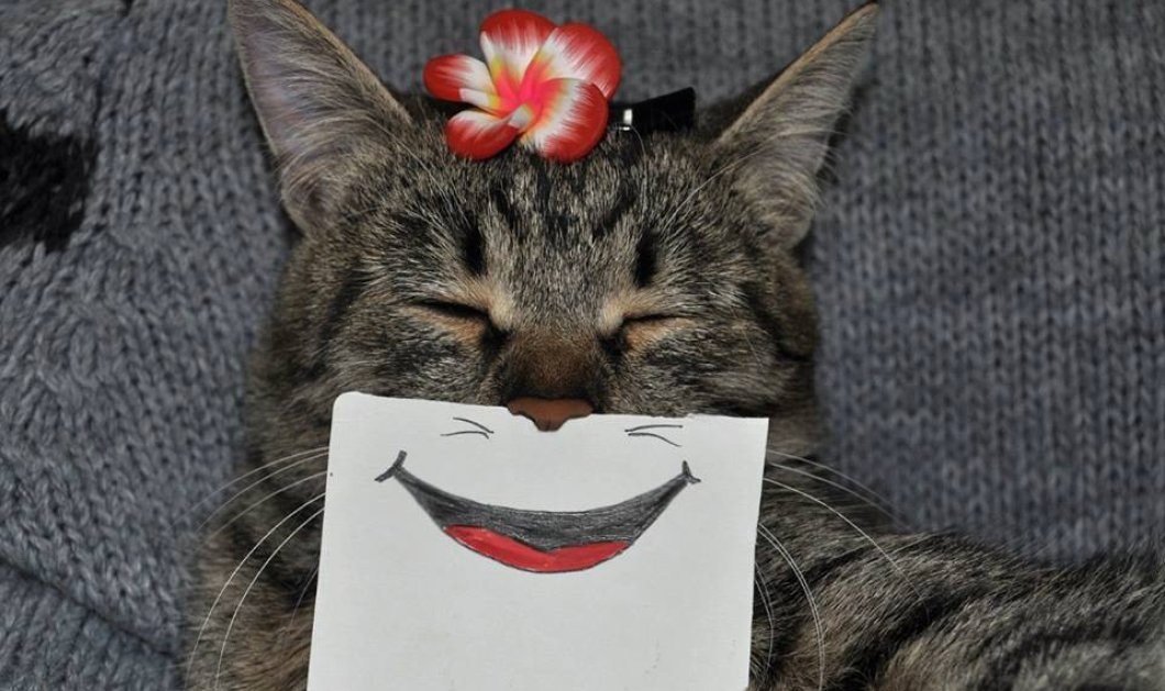 ef475df66c41 Τα πολλά πρόσωπα μιας γάτας με χιούμορ   φαντασία! - Κυρίως Φωτογραφία -  Gallery -