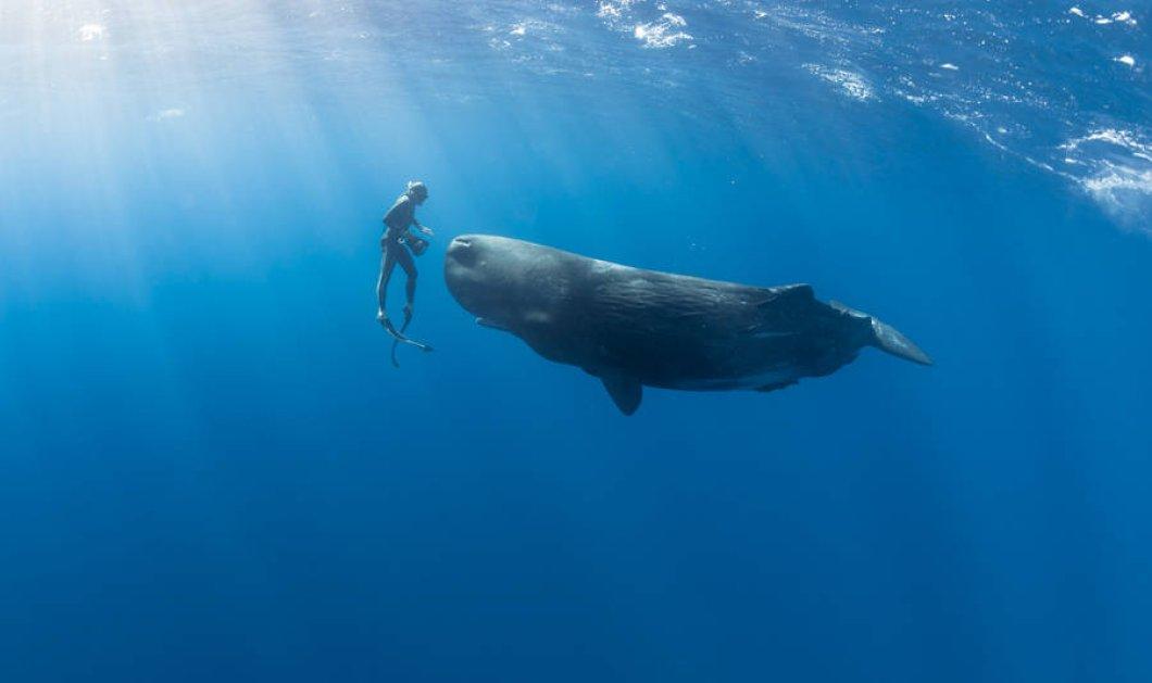 Πριν φύγει το καλοκαίρι για τα καλά πάμε στο βυθό της θάλασσας για συναρπαστικές φωτογραφίες  - Κυρίως Φωτογραφία - Gallery - Video