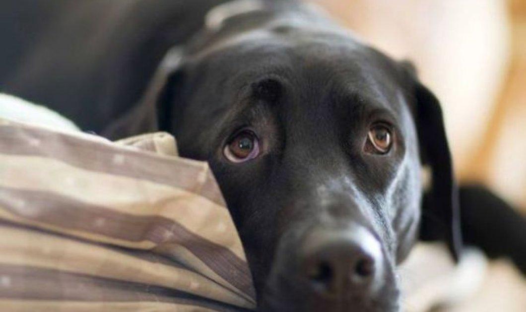 Συγκλονιστικό βίντεο - ντοκουμέντο: Δημοτικός σύμβουλος Καβάλας κακοποιεί βάναυσα τον σκύλο του  - Κυρίως Φωτογραφία - Gallery - Video