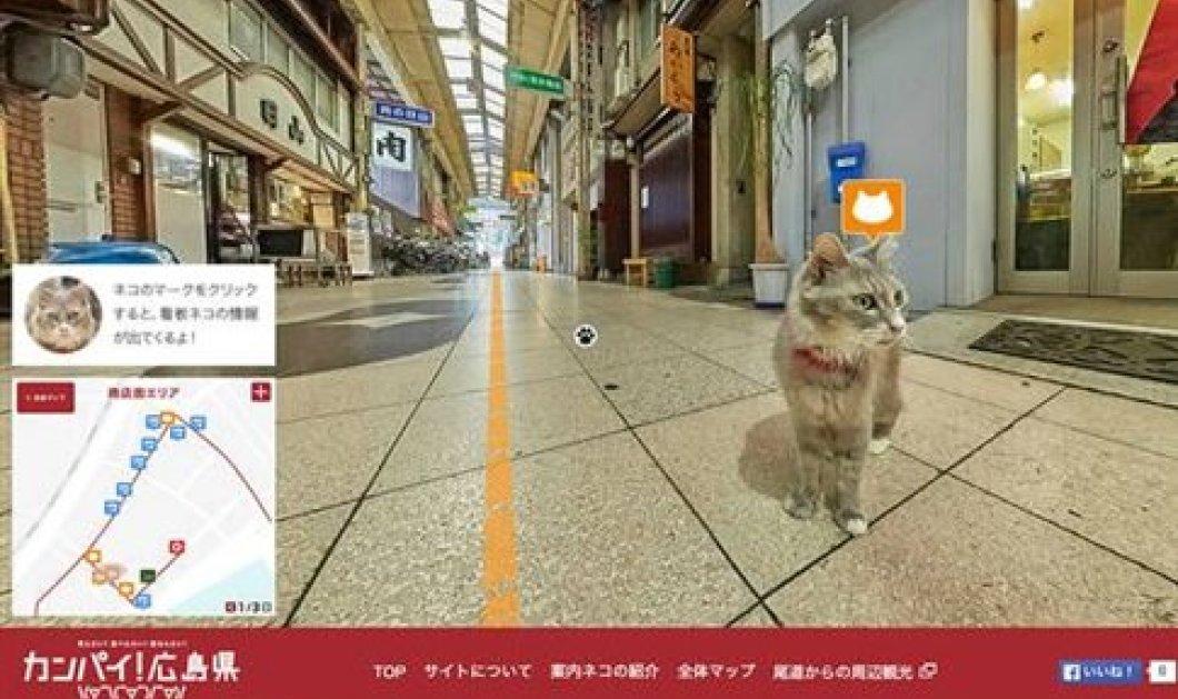 Χάρτης Street View για γάτες από τη Google - Θαυμάστε μια Ιαπωνική πόλη με γατίσια ματιά   - Κυρίως Φωτογραφία - Gallery - Video
