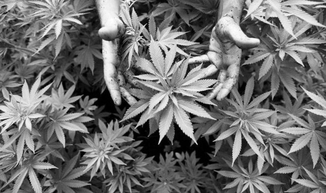 Vintage Story: Όταν καλλιεργούσαν νόμιμα χασίς στην Αρκαδία - Όλα τα κορίτσια ήταν εύθυμα & πειρακτικά - Κυρίως Φωτογραφία - Gallery - Video