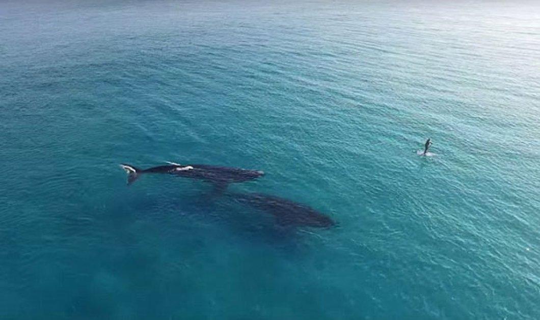 Μοναδικό θέαμα: Τετ α τετ σέρφερ με 2 φάλαινες όπως το κατέγραψε drone! - Κυρίως Φωτογραφία - Gallery - Video