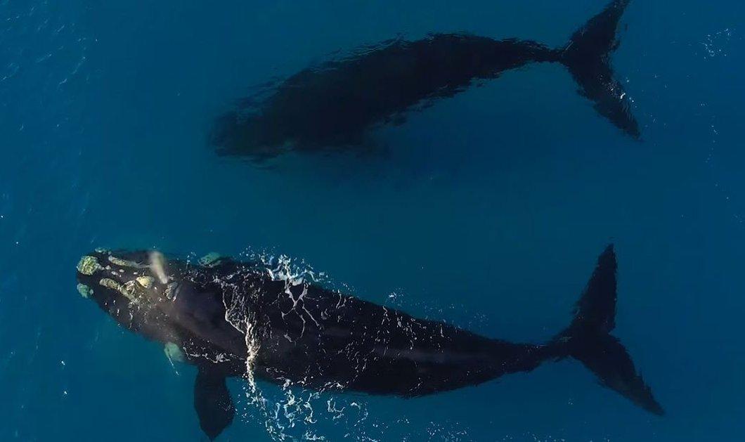 Ωραίο βίντεο: 2 γιγάντιες φάλαινες παίζουν με 1 σέρφερ & το θέαμα είναι μοναδικό  - Κυρίως Φωτογραφία - Gallery - Video