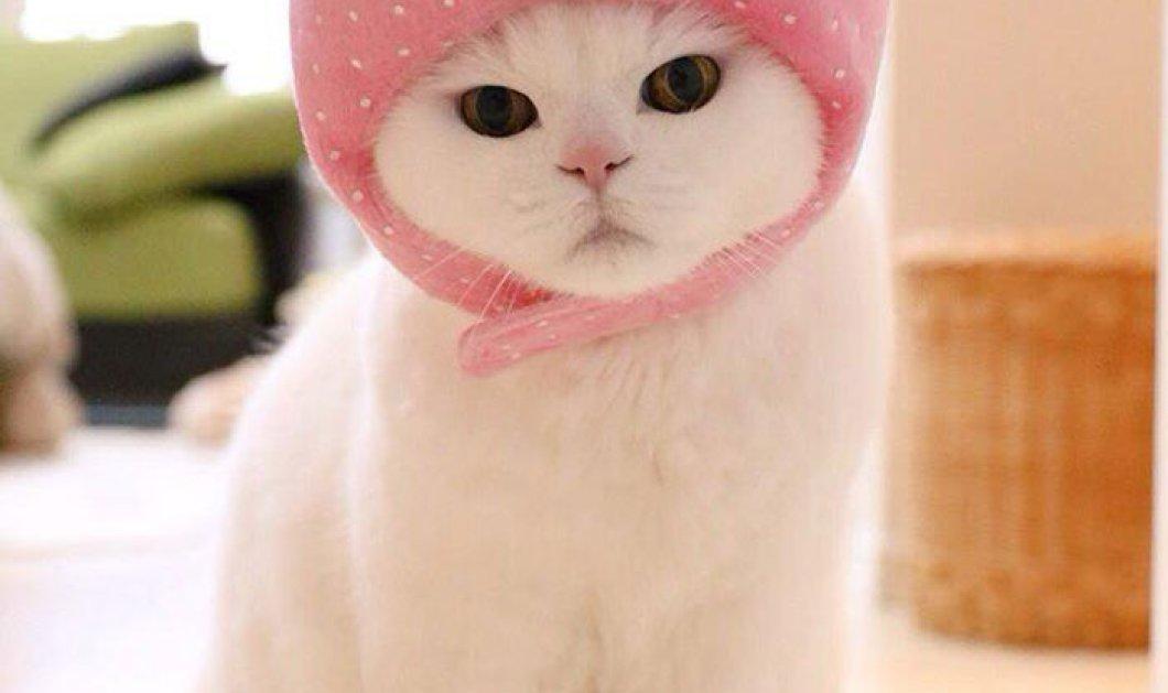 e0d64c59c05f Αυτή η 17χρονη γάτα είναι η απόλυτη τεμπέλα   η μεγάλη star του internet  στην Ιαπωνία