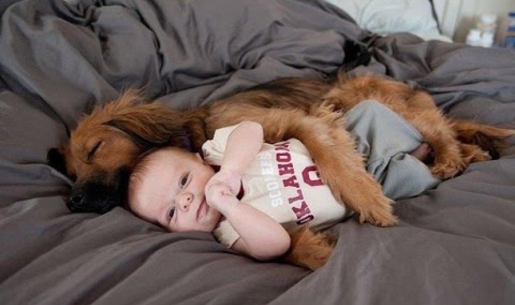 Βίντεο: Να γιατί ο σκύλος είναι ξεκάθαρα ο καλύτερος και πιο γλυκός φύλακας για το μωρό σας - Κυρίως Φωτογραφία - Gallery - Video