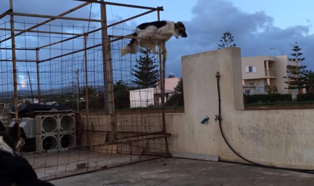 Βίντεο: Τι μεθόδους χρησιμοποιεί ένας σκύλος για να πάει κοντά στην αγαπημένη του; - Κυρίως Φωτογραφία - Gallery - Video