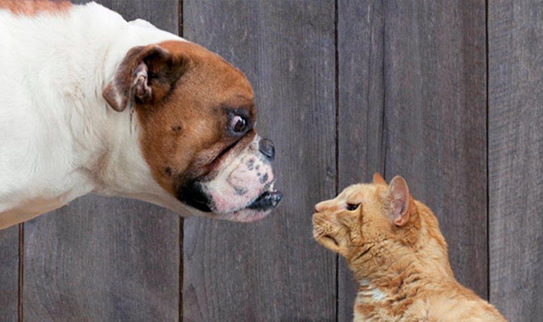 5ac29be1e2fb Πόσο τολμηρή αυτή η γάτα που σώζει με αυτοθυσία ένα αγοράκι από τα δόντια  του σκύλου