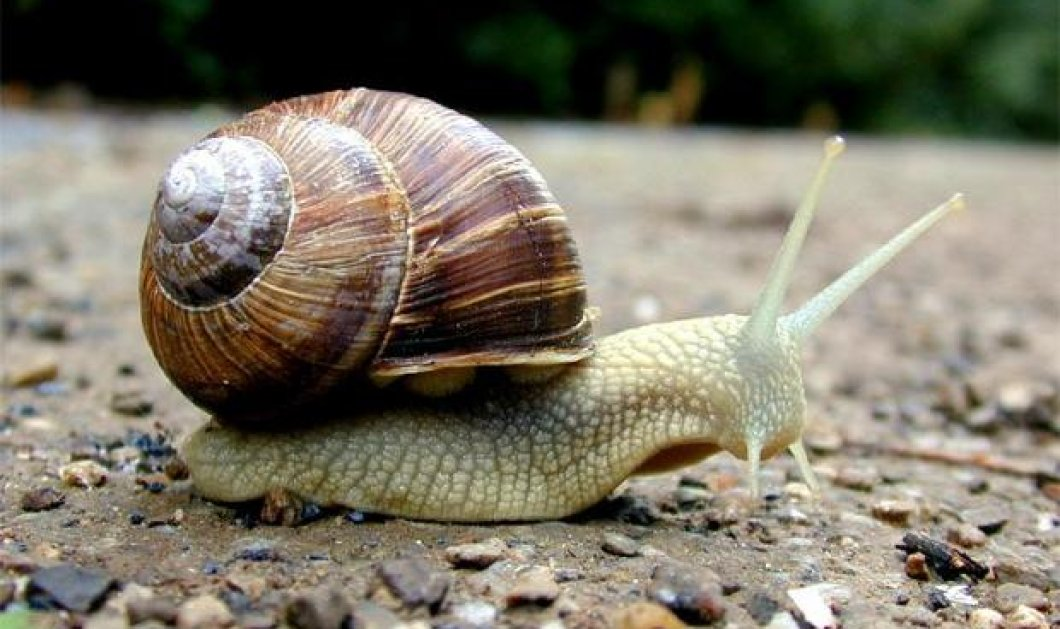 Άχου το ένα σαλιγκαράκι τόσο δα! Το μικρότερο στον κόσμο μόλις 0,7 χιλιοστά - Κυρίως Φωτογραφία - Gallery - Video