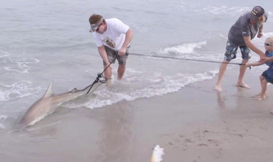 Εκδίκηση! Τον χτύπησε καρχαρίας στο σερφ και εκείνος την επόμενη μέρα τον σκότωσε και τον έφαγε  - Κυρίως Φωτογραφία - Gallery - Video