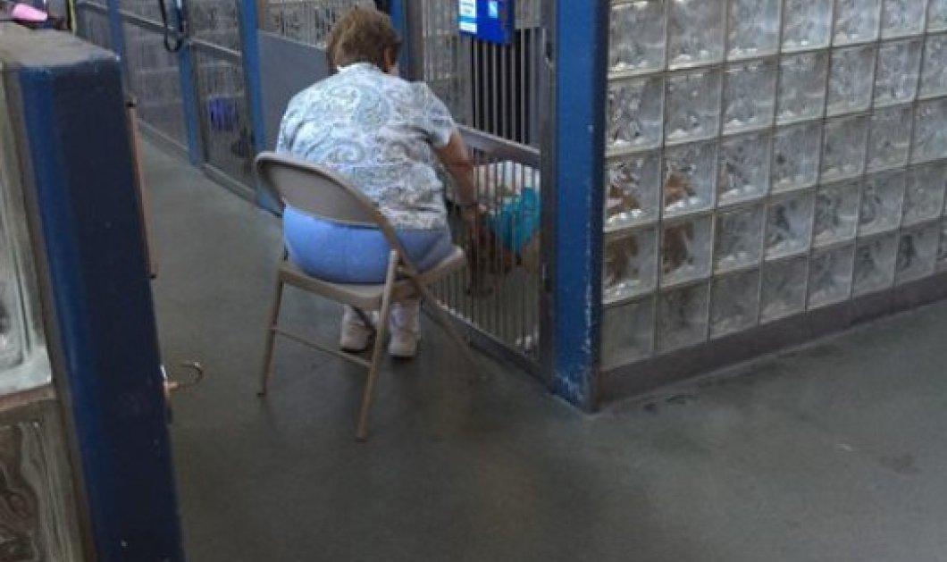Γυναίκα διαβάζει σε σκύλους για να μην αισθάνονται μόνοι- Η ιστορία έγινε αμέσως δημοφιλής  - Κυρίως Φωτογραφία - Gallery - Video