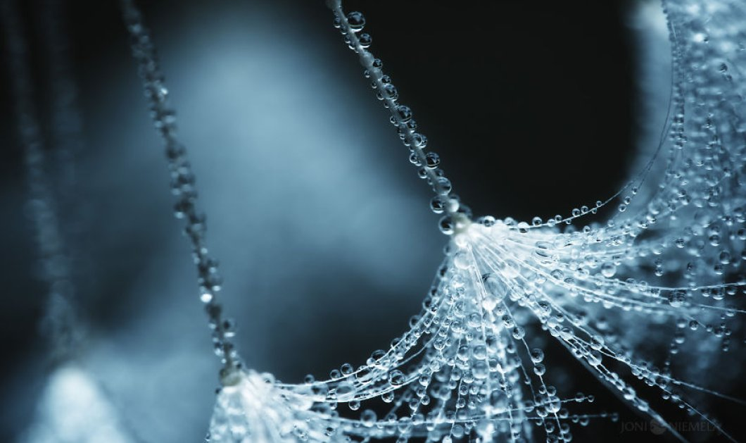 Οι σπόροι στο μικροσκόπιο ενός καλλιτέχνη γίνονται έργα τέχνης που θαυμάζει η πλάση      - Κυρίως Φωτογραφία - Gallery - Video