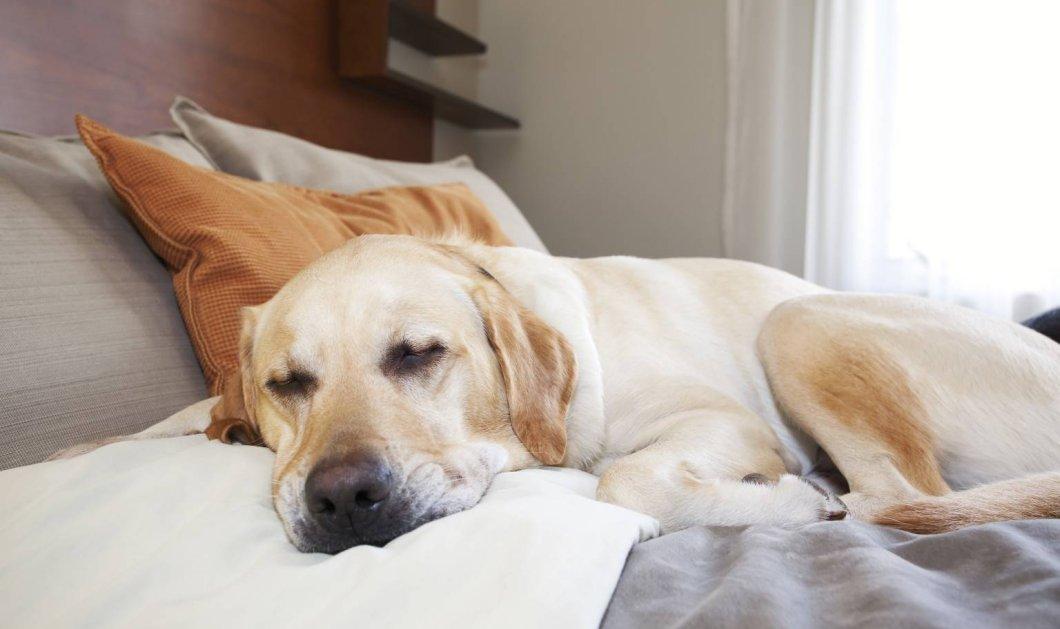 14 pet friendly ξενώνες σε όλη την Ελλάδα: Για εσάς που δεν αποχωρίζεστε το σκυλάκι ή τη γάτα σας  - Κυρίως Φωτογραφία - Gallery - Video