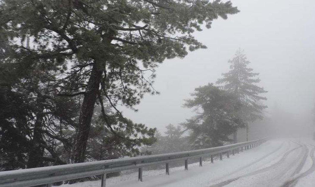 Ολόλευκη Πάρνηθα: Δείτε τις φωτογραφίες από το πρώτο χιόνι στο όμορφο βουνό της Αττικής - Κυρίως Φωτογραφία - Gallery - Video