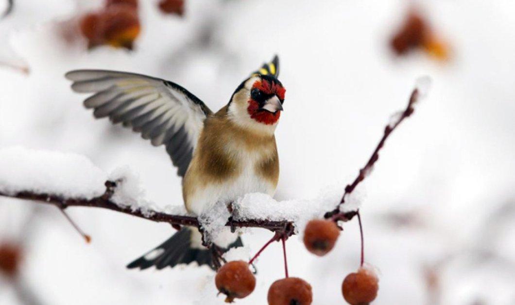 """""""Μυρίζουν"""" Χριστούγεννα! Που θα έχει παγετό - Η θερμοκρασία στους 16 βαθμούς - Κυρίως Φωτογραφία - Gallery - Video"""