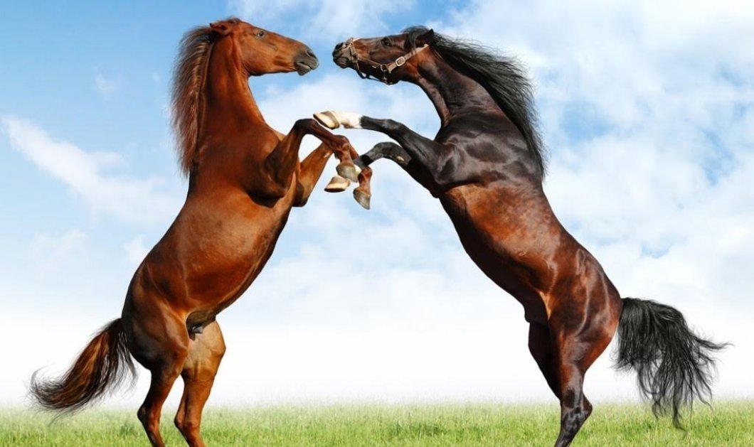 Σοκαριστική μελέτη: 1700 άλογα βιάσθηκαν από ανθρώπους στην Ελβετία - 10.000 προδιάθεση για κτηνοβασία - Κυρίως Φωτογραφία - Gallery - Video