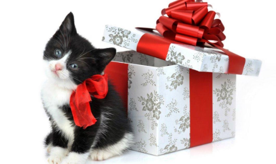 Δείξε μου το ζώδιο σου να δω τι δώρο... δεν θα σου κάνω - Ιδού τα δώρα που δεν πρέπει ποτέ να προσφέρεις - Κυρίως Φωτογραφία - Gallery - Video