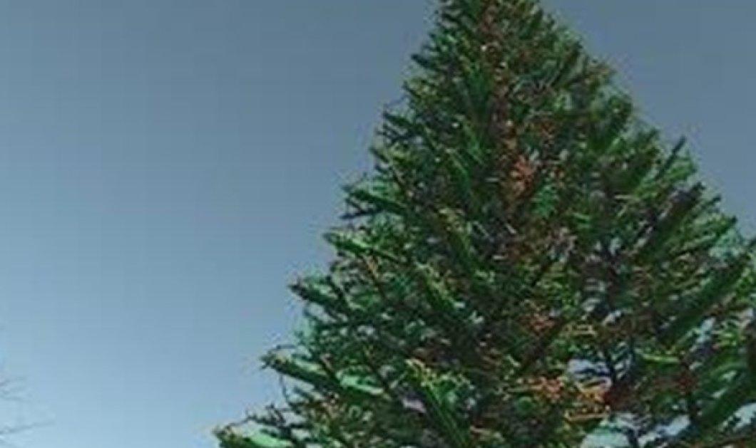Όλο από Lego: Αυτό το χριστουγεννιάτικο δέντρο δεν μοιάζει με κανένα άλλο!  - Κυρίως Φωτογραφία - Gallery - Video