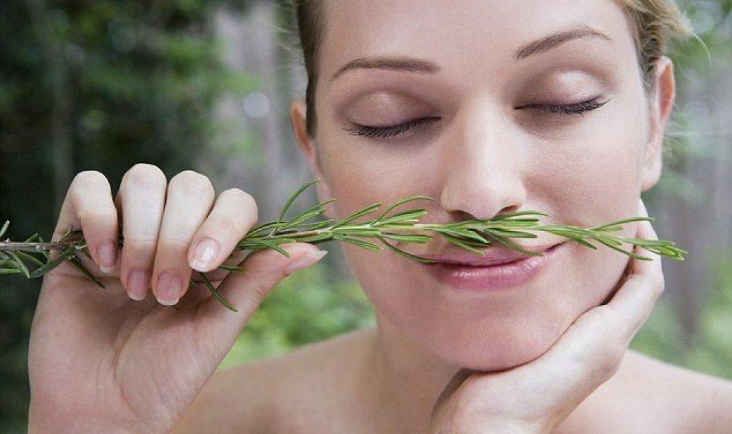Το δενδρολίβανο τονώνει τη μνήμη: Μυρίστε και θυμηθείτε καλύτερα!  - Κυρίως Φωτογραφία - Gallery - Video