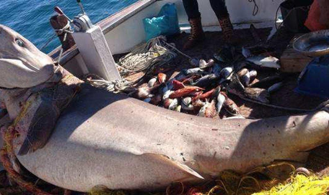 """Πόρος: Ψαράς έπιασε καρχαρία 2,5 μέτρων, τον λεγόμενο """"σαπουνά"""" - Κυρίως Φωτογραφία - Gallery - Video"""