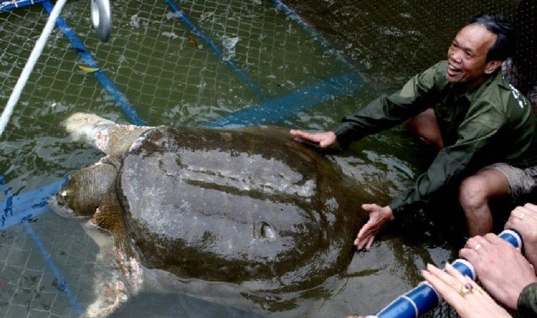 Θρήνος στο Βιετνάμ για τον θάνατο ιερής χελώνας: Κακός οιωνός για το Κομμουνιστικό Κόμμα  - Κυρίως Φωτογραφία - Gallery - Video
