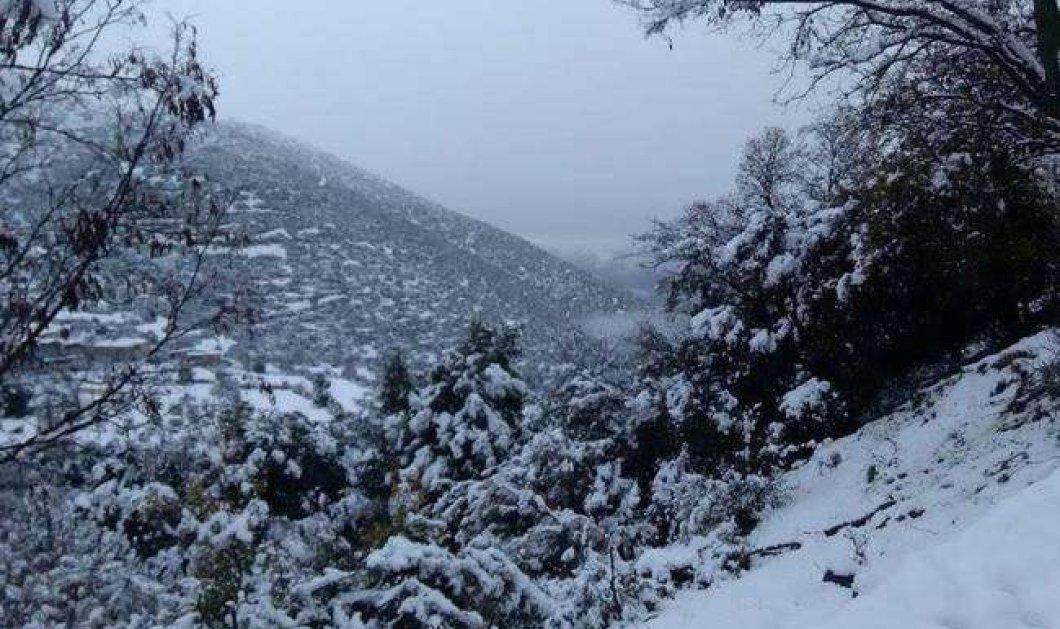 """Στην """"κατάψυξη"""" όλη η χώρα - Μεγάλα προβλήματα στις μετακινήσεις άφησε ο χιονιάς το Σάββατο - Πού χρειάζονται αλυσίδες - Κυρίως Φωτογραφία - Gallery - Video"""