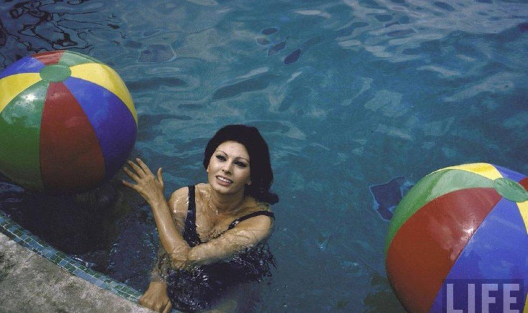Vintage beauty pics: Όταν το 1964 η Σοφία Λόρεν έβγαινε από την πισίνα της βίλας της & φιλούσε τον Κάρλο Πόντι - Κυρίως Φωτογραφία - Gallery - Video