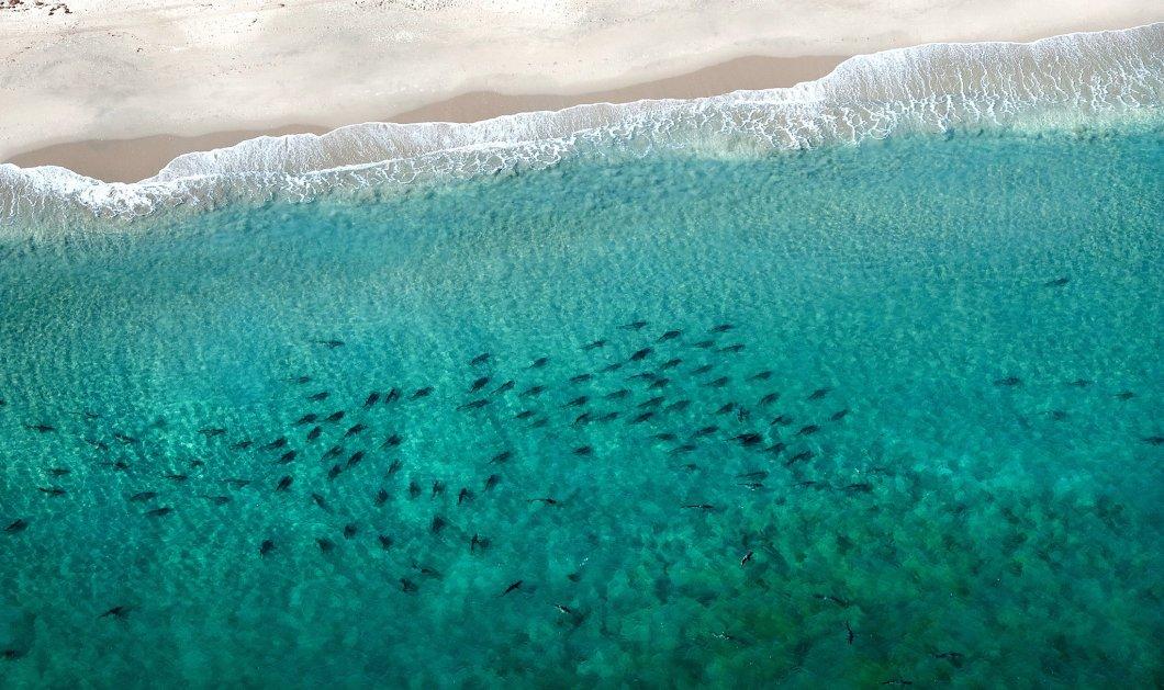 To βίντεο που κόβει την ανάσα: Χιλιάδες καρχαρίες κολυμπούν σε απόσταση αναπνοής από την ακτή της Φλόριντα - Κυρίως Φωτογραφία - Gallery - Video