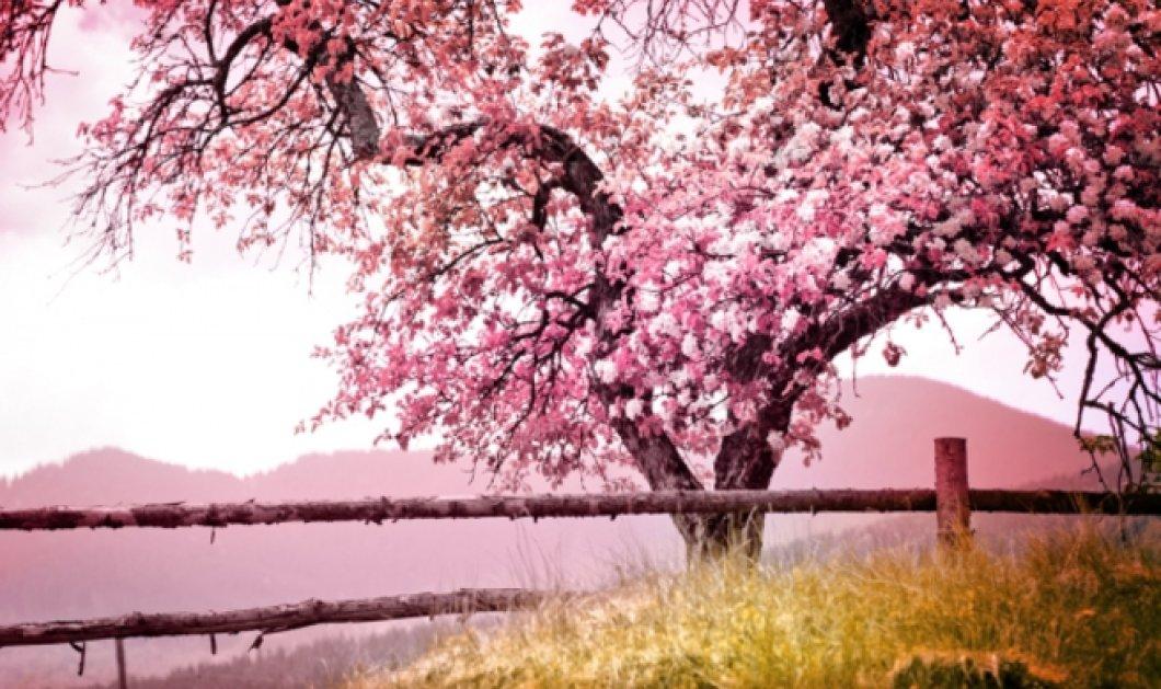 Η Άνοιξη μπαίνει στην καρδιά μας με τα λουλούδια της να ανθίζουν σε αυτό το βίντεο - Κυρίως Φωτογραφία - Gallery - Video