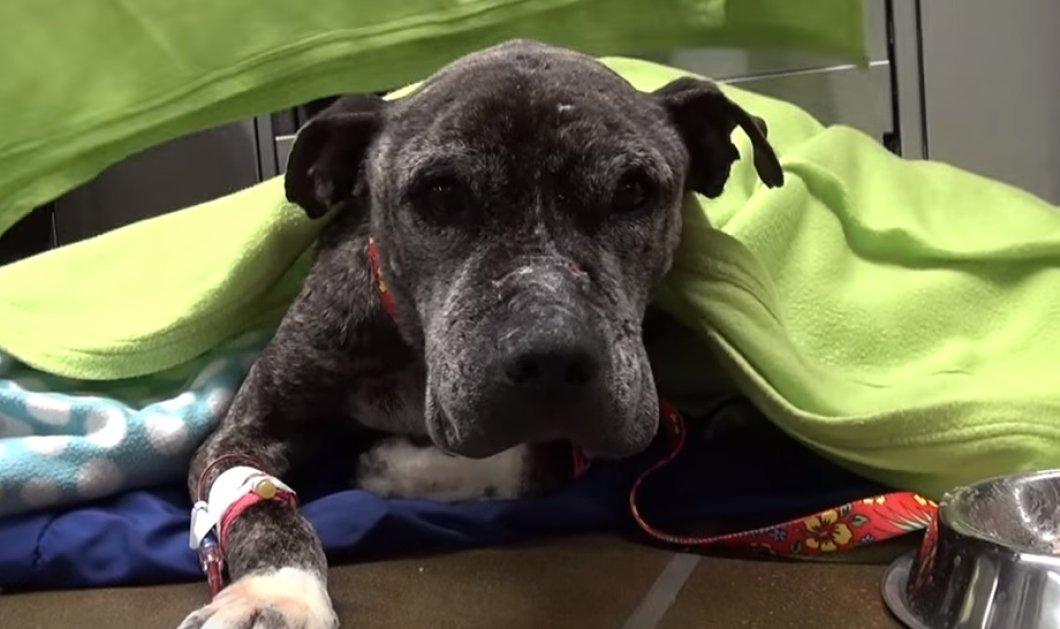 Bίντεο που ραγίζει καρδιές: Εγκατέλειψαν pitbull κάτω από γέφυρα - Όταν τον εντόπισε η φιλοζωική, ήταν πολύ αργά... - Κυρίως Φωτογραφία - Gallery - Video
