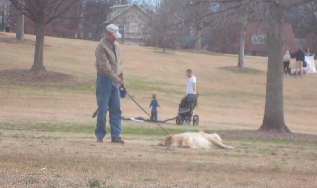 Smile τρελό: O σκύλος παριστάνει τον νεκρό για να μη γυρίσει σπίτι από την βόλτα του στον ήλιο (βίντεο) - Κυρίως Φωτογραφία - Gallery - Video
